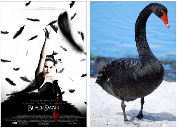 Black Swan η ταινία