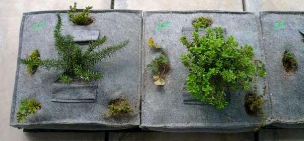 OS8 pandespani edition - kipos me aromatika sto balkoni