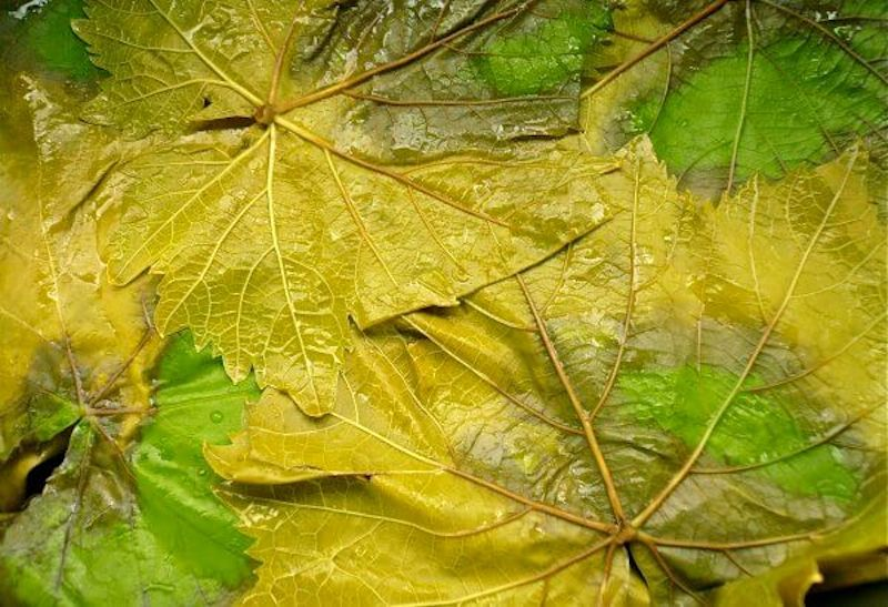 fresh vine/ grape leaves lightly boiled and cooled