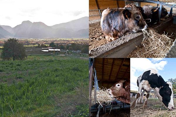φάρμα Μπράλου - εκτροφή ζώων - farma bralou - ektrofi zoon