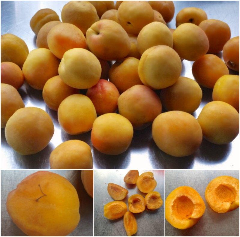 quick apricot jam - apricots