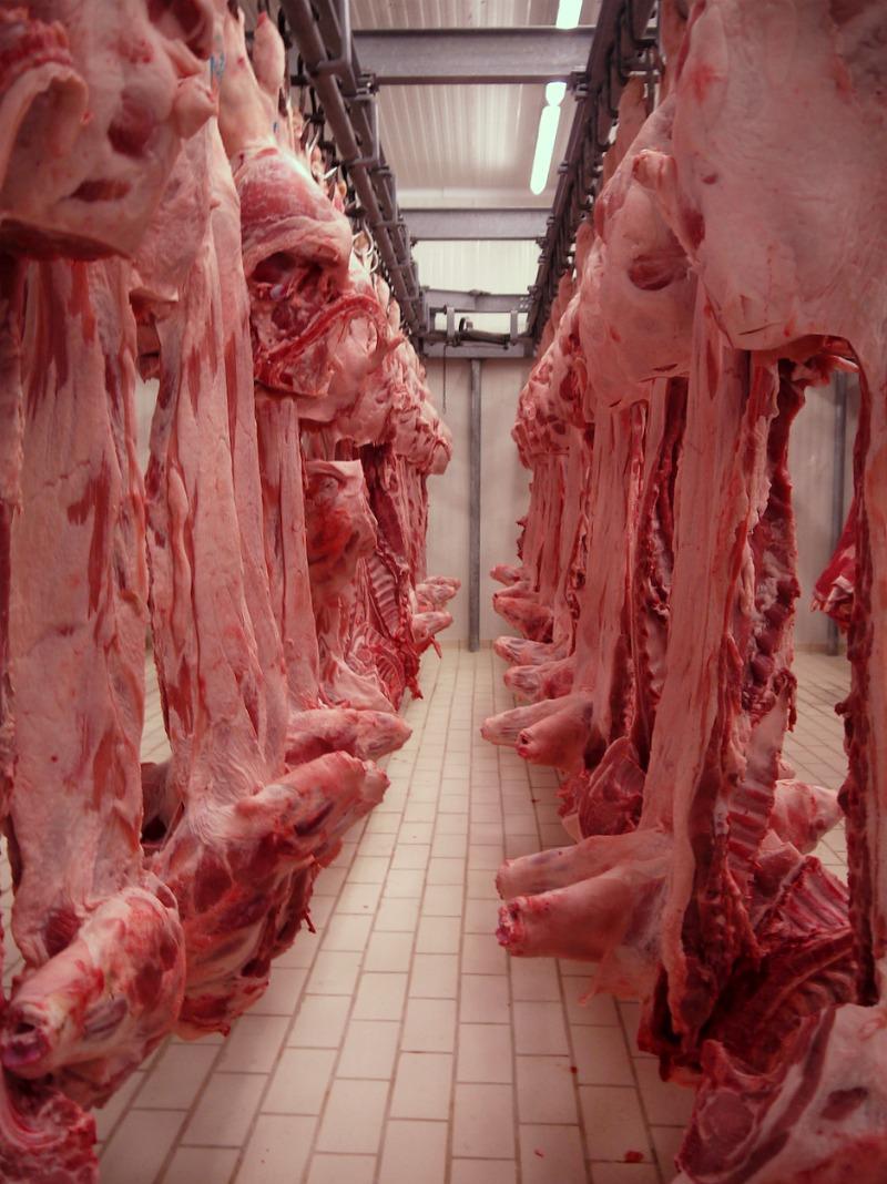 Ψυκτικοί θάλαμοι κρέατος (συσκευαστήριο Βερόπουλος) 1α