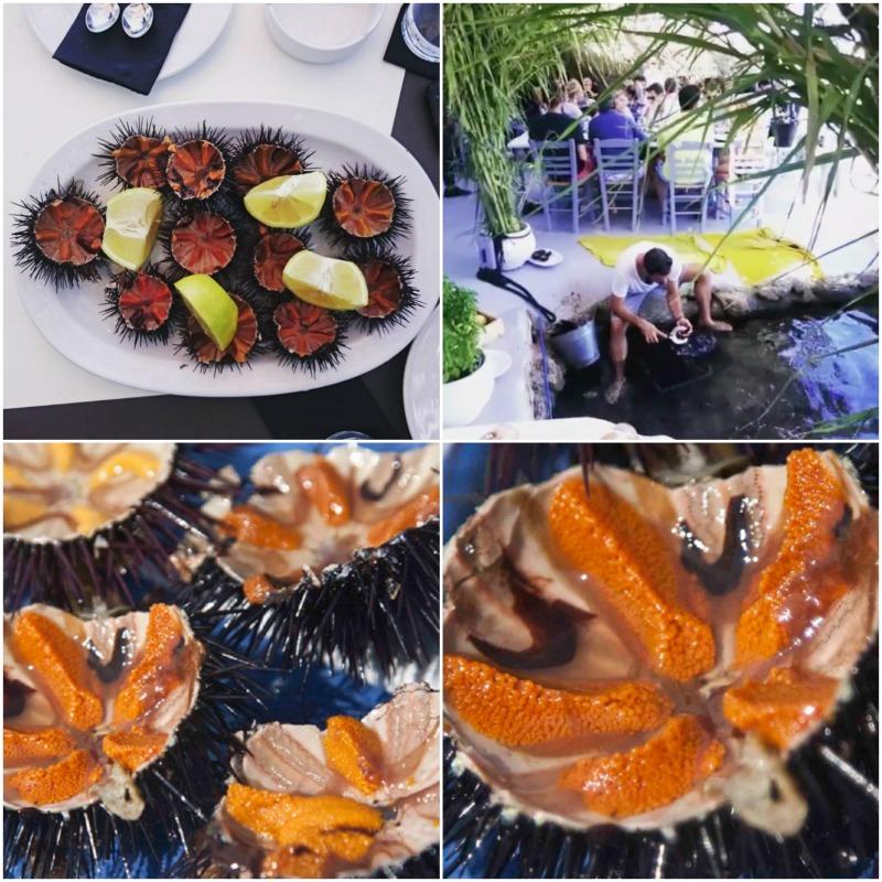 αχινοί δίπλα στη θάλασσα - pandespani, instagram