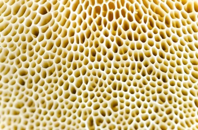 Μανιτάρια: λεπτομέρεια υφής