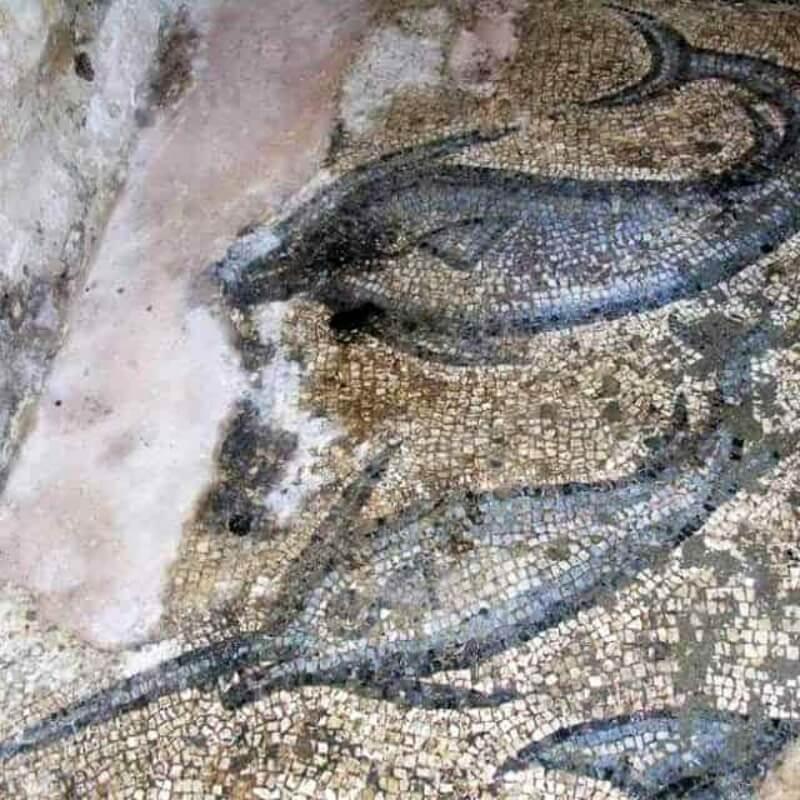 ελληνικό μωσαϊκό με ψάρια του 2ου αι. μ.Χ. στην Αλικαρνασσό