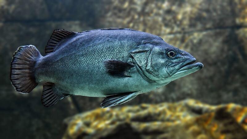Αλιεία & περιβάλλον: χωρίς  αλλαγές, δεν θάχουμε ψάρια