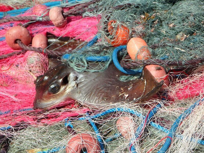 αλιεία - απορρίψεις - παρεμπίμποντα