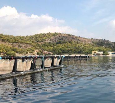 Ιχθυοκαλλιέργεια ελληνικού ψαριού - Fish from Greece - μέρος Β'