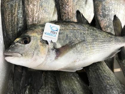 Υψηλής ποιότητος ελληνικό ψάρι ιχθυοκαλλιέργειας με πιστοποίηση Fish from Greece
