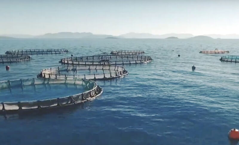 Ιχθυοκαλλιέργεια ελληνικού ψαριού - Fish from Greece