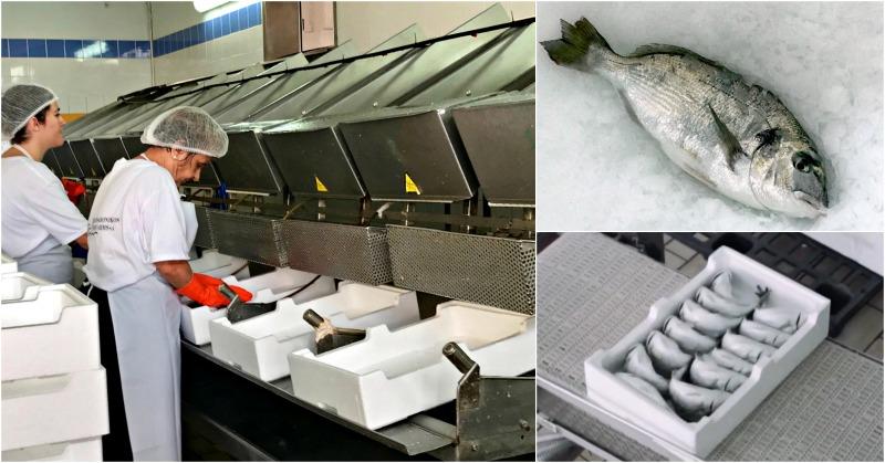 ψάρια ιχθυοτροφείου - συσκευασία