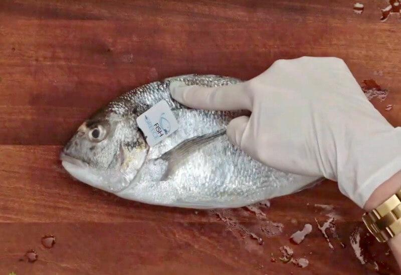 φρεσκια τσιπουρα Fish from Greece