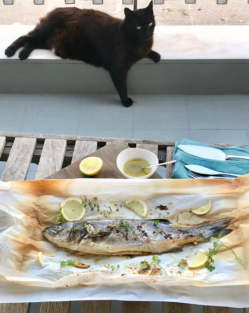 Fish in parchment with oregano and lemon, olive oil and lemon sauce. At the back: Jiddu, the cat