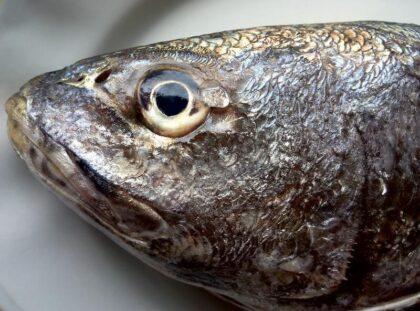 Φρέσκο ψάρι ή απλώς νωπό;