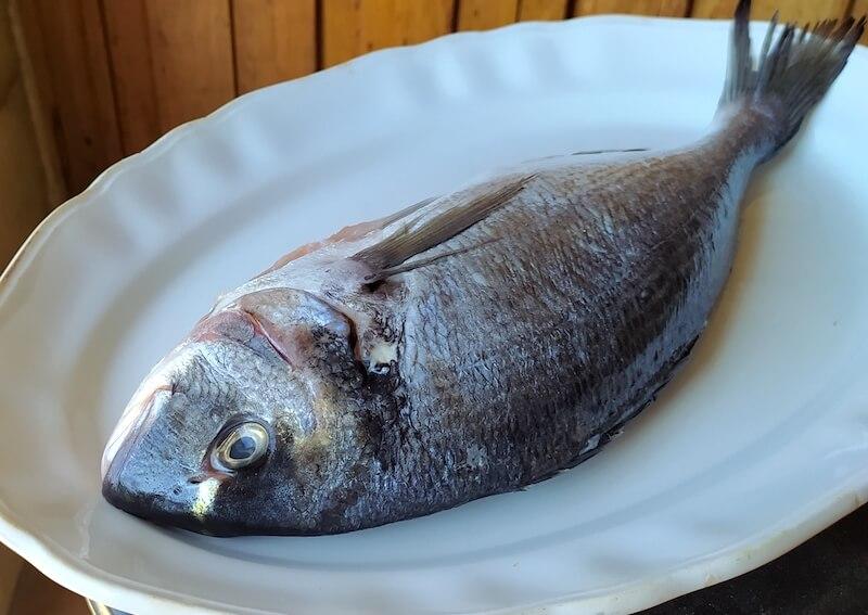 Το σώμα του ψαριού πρέπει να είναι σφιχτό και να επανέρχεται όταν το πιέζεις, να μην μένει δηλαδή βαθούλωμα.