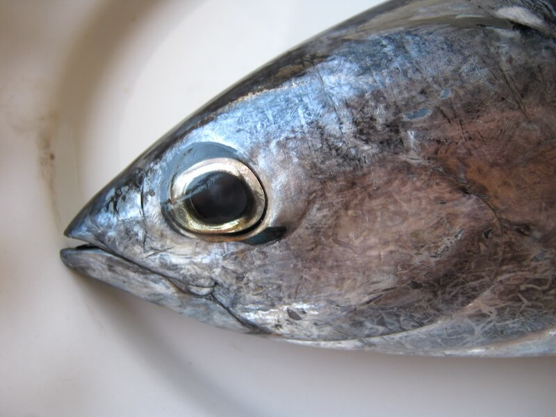Φρέσκο ψάρι: Τα μάτια είναι διογκωμένα προς τα έξω