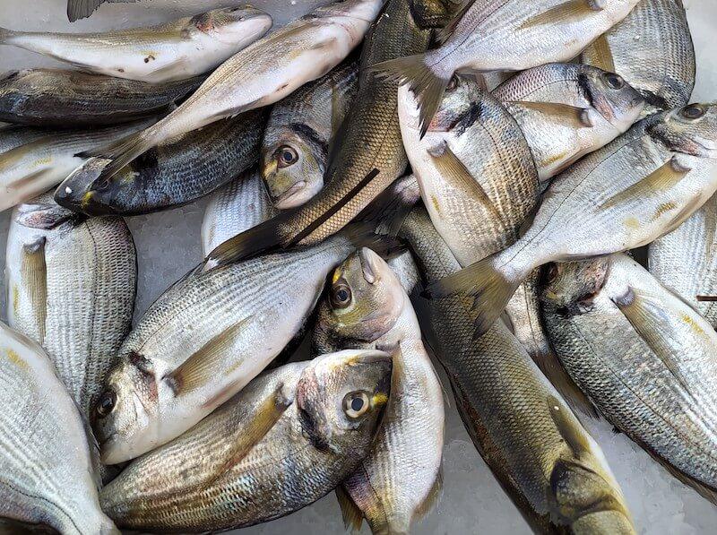 Πιο νόστιμα ψάρια: ποιο ψάρι από ποια θάλασσα; Φωτό: Labros Tsitsimelis