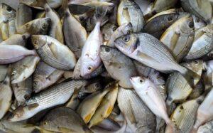 Πιο νόστιμα ψάρια: ποιο ψάρι από ποια θάλασσα;