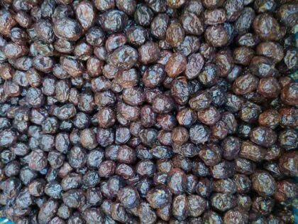 Ελιές σπιτικές: θεωρία και πράξη σε κάθε είδος ελιάς
